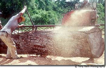 Portable sawmill, Northern Belize