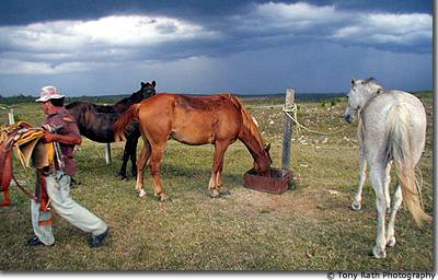 Cowboys caring for livestock before the storm