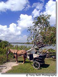 Horse and buggy at Progresso Lagoon